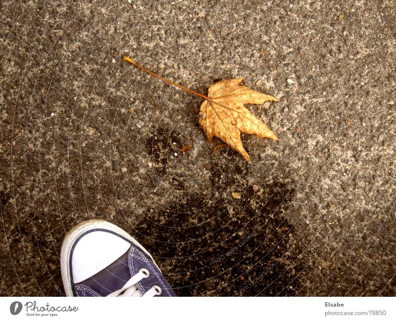 Water Leaf Autumn Footwear Clothing Floor covering Asphalt Sneakers Puddle