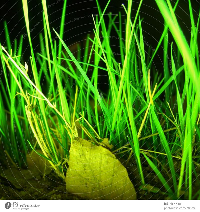 Nature Green Leaf Yellow Lamp Dark Meadow Grass Crazy Lawn Radiation Neon light Muddled Grassland Flashy Knoll