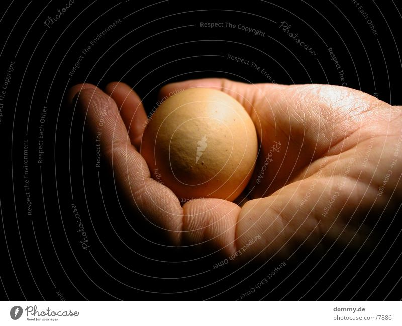 Hand Warmth Fingers Safety Physics Egg Safety (feeling of) Photographic technology