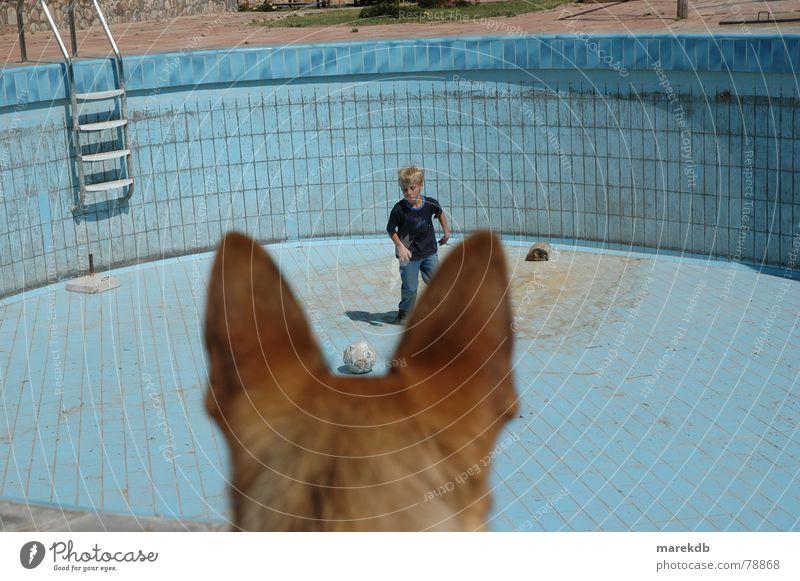 watchdog Dog Playing Empty Bolivia Pelt Swimming pool Ball sports Child Water Ear