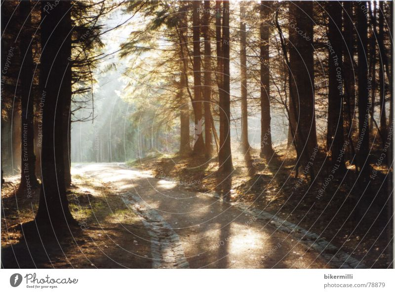 Nature Beautiful Tree Sun Plant Colour Forest Dark Relaxation Autumn Wood Stone Lanes & trails Warmth Sand Landscape