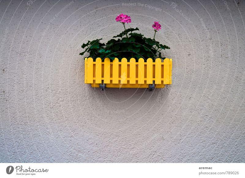 flower power Plant Flower Pot plant Wall (barrier) Wall (building) Facade Hip & trendy Original Rebellious Gray Colour photo Exterior shot Deserted