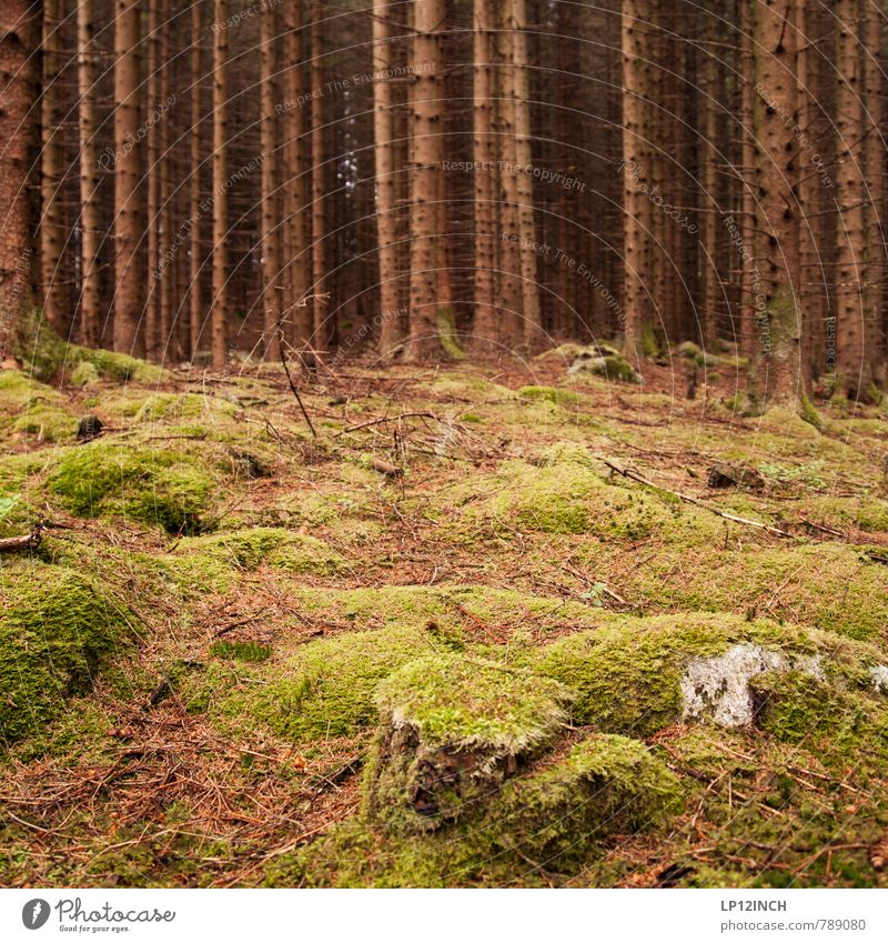 N O R W A Y - mOOs - XII Environment Nature Landscape Animal Earth Summer Moss Fir tree Forest Virgin forest Stone Going Green Beautiful Loneliness Colour