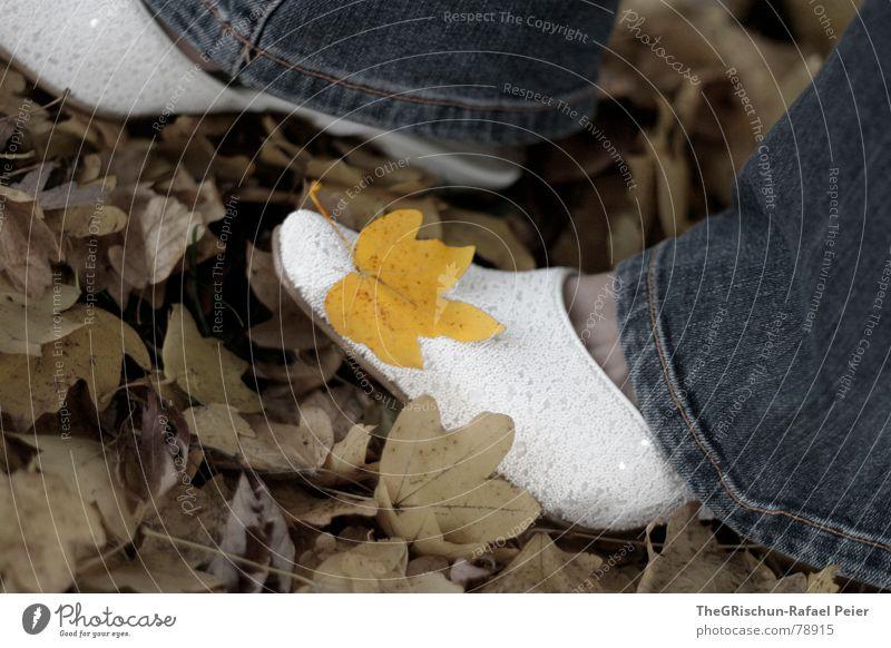 Woman Human being Nature Tree Flower Blue Plant Leaf Yellow Autumn Feet Footwear Moody Brown Jeans Gloomy