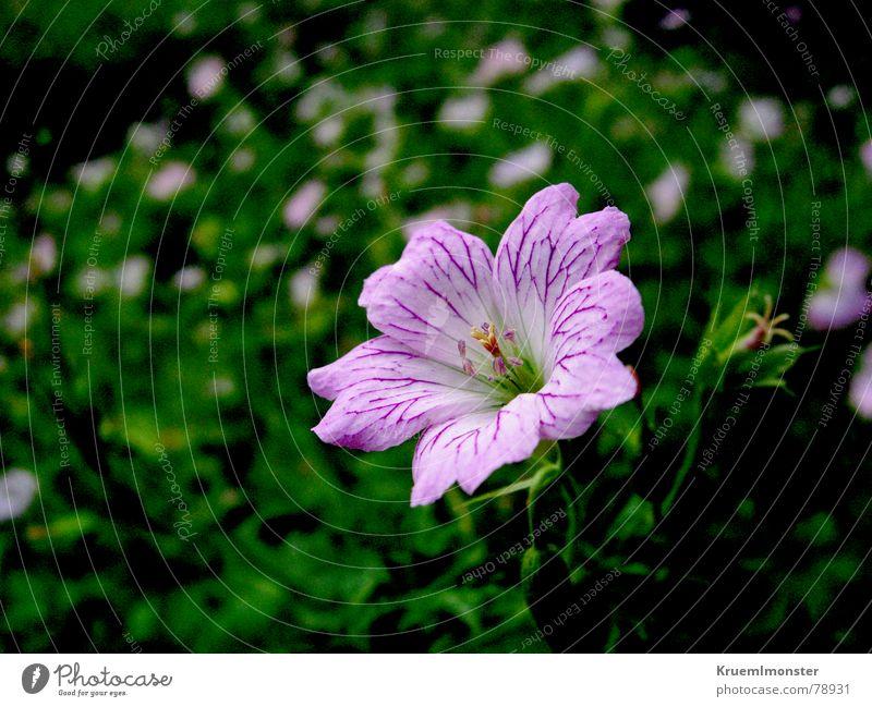 Beautiful Flower Green Summer Meadow Blossom Grass Field Pink Sweet Delicate Stalk Caresses