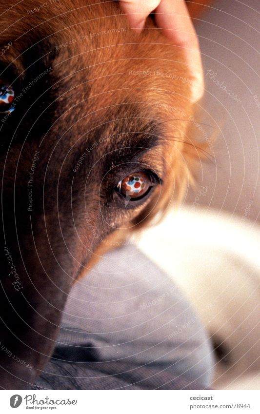 eye dog Love Macro (Extreme close-up) Close-up trust obedient home gratitude colours circles
