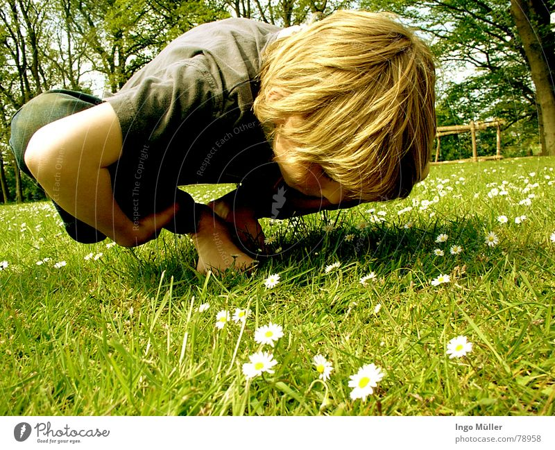 Child Green Summer Flower Meadow Boy (child) Spring