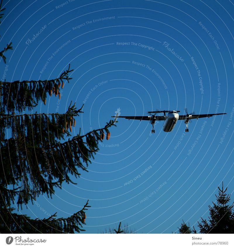 points of contact Vacation & Travel Summer Aviation Beautiful weather Forest Airplane Passenger plane Airplane landing Airplane takeoff Flying Beginning Tourism