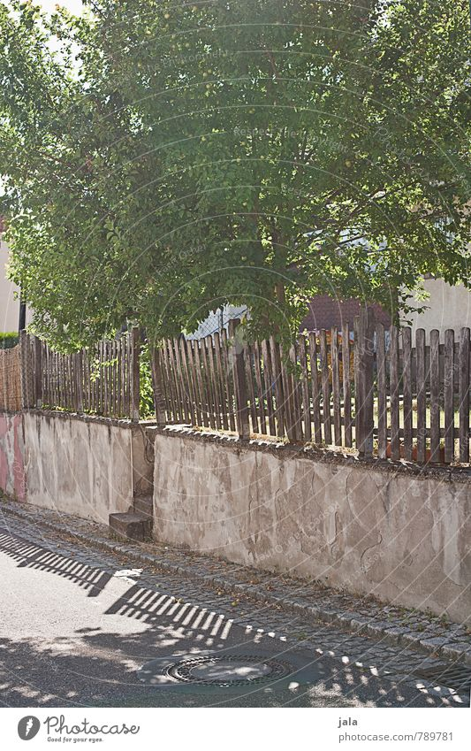 apple Sunlight Summer Beautiful weather Plant Tree Agricultural crop Apple tree Manmade structures Wall (barrier) Wall (building) Fence Street Lanes & trails