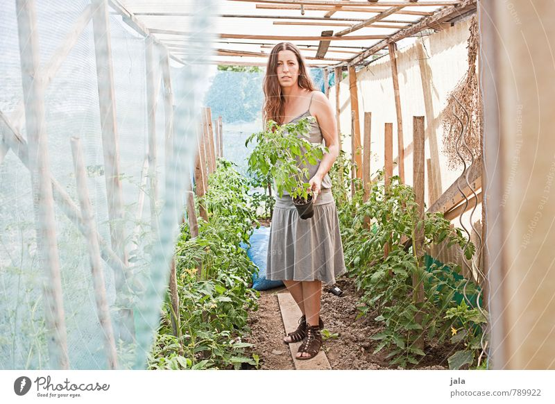 tomato house Work and employment Gardening Agriculture Forestry Human being Feminine Woman Adults 1 30 - 45 years Environment Nature Plant Summer