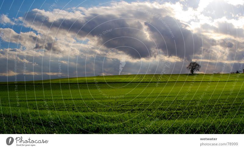 Nature Sky Tree Sun Green Clouds Autumn Meadow Grass Landscape Green space Early fall