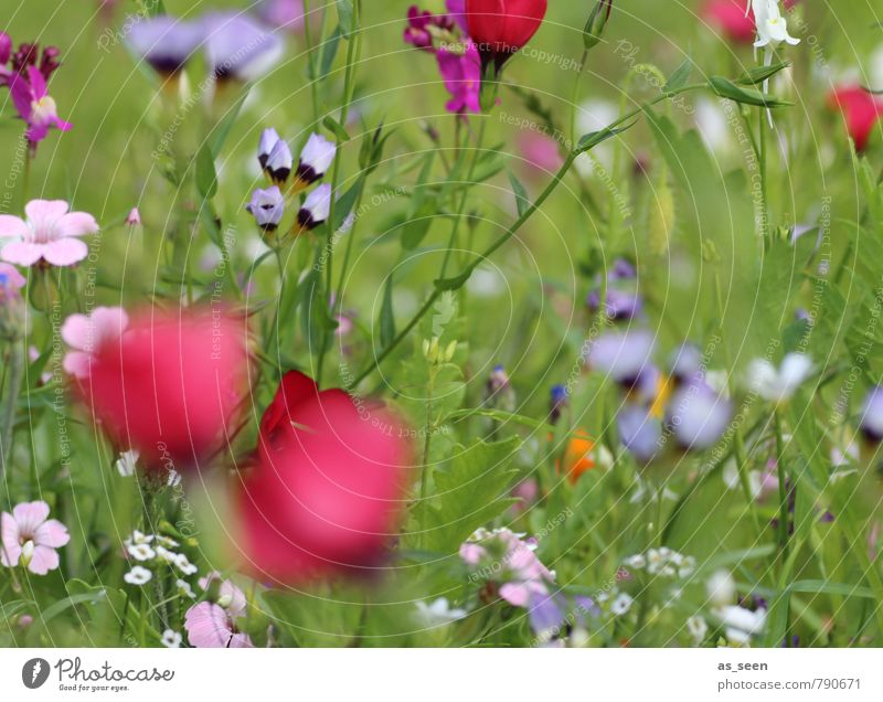 Nature Plant Blue Colour Summer Red Joy Environment Life Blossom Meadow Natural Healthy Garden Freedom Field