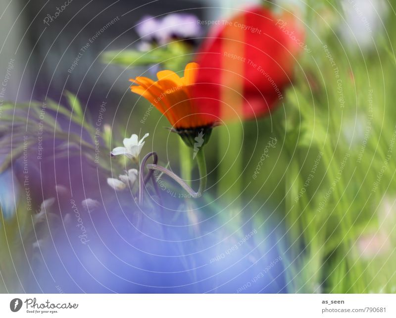 Summer meadow III Wellness Harmonious Painting and drawing (object) Environment Nature Plant Flower Grass Blossom Garden Meadow Blossoming Fragrance Illuminate