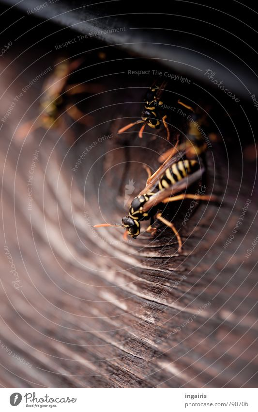 subtenants Wall (barrier) Wall (building) Facade Balcony Animal Wild animal Wing Wasps field wasp Insect 3 Wood Movement Crouch Sit Living or residing Together