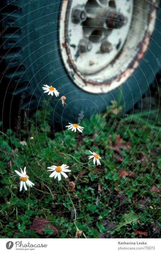 junkyard Daisy Flower Green Bouquet Blossom Plant Yellow Grass Field Green space Leaf Spring Jump Autumn Decoration Derelict tyre fabric Orange Car Earth