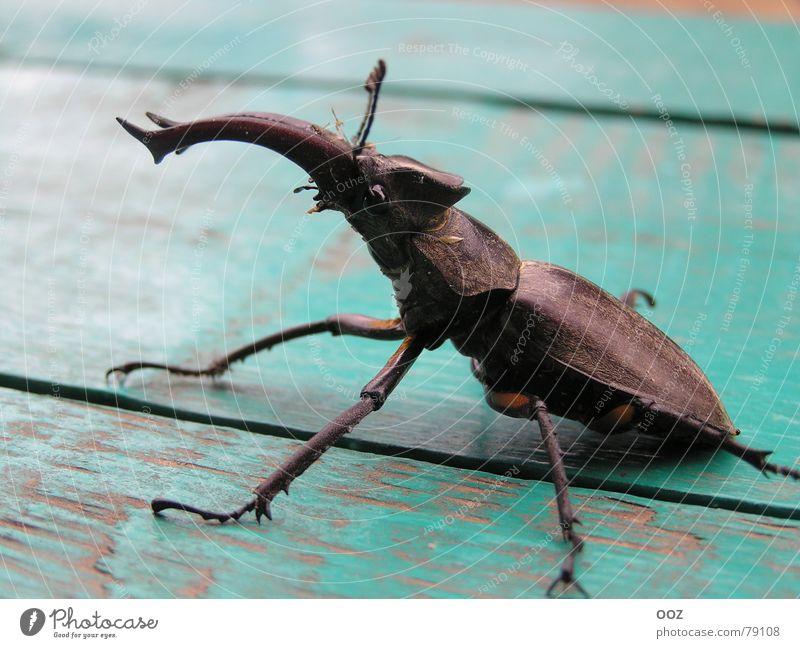 Antlers Beetle Monster