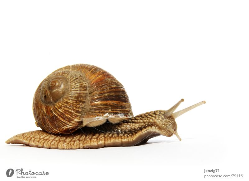 House (Residential Structure) Eyes Animal Snail Crawl Feeler Detached house Slimy Snail shell Mucus