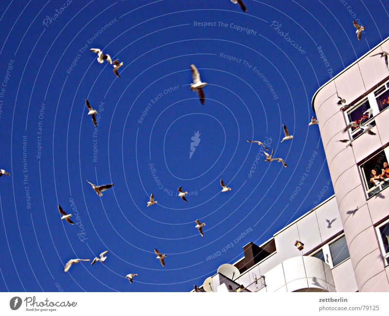 seagulls Seagull Feeding Loggia Worm's-eye view Town House (Residential Structure) High-rise Window Balcony Joy Bird mövenperspktive photographer's perspective