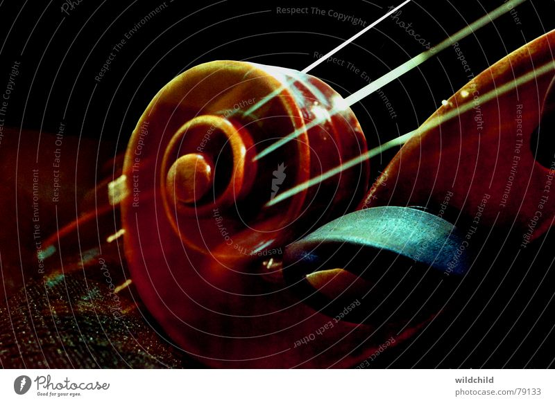 snail Violin Ebony Wood Musical instrument string Concert Art Culture Macro (Extreme close-up) Close-up Snail