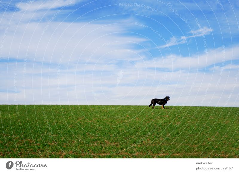 Dog on meadow Meadow Winter Green Grass Field Loneliness Sky Animal Green space Black Pet Deserted Germany Mammal lonesome Blue Landscape Lawn