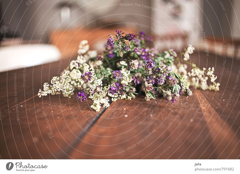 flowers Living or residing Flat (apartment) Interior design Table Room Flower Blossom Bouquet Esthetic Natural Beautiful Wooden table Colour photo Interior shot