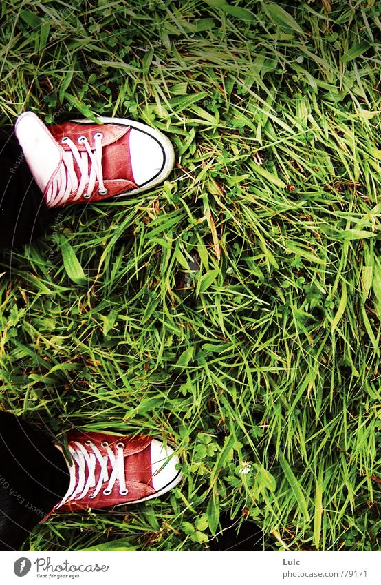 Colour Wind Jeans Wild animal Chucks Sneakers Footwear