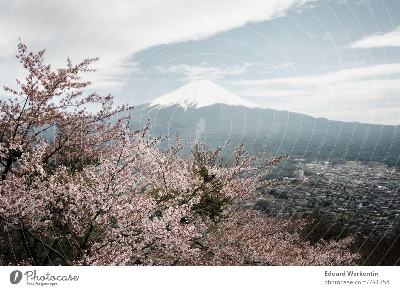 Fujiyama Nature Plant Air Sky Clouds Mountain Idyll Kitsch Japan Cherry blossom Tree Spring Mount Fuji Subdued colour Exterior shot Deserted Day Panorama (View)