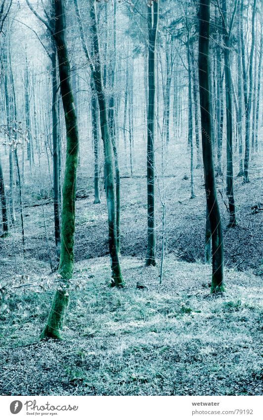 cold forest Forest Wood Tree Cold Winter Leaf Germany Wood flour left over Blue Nature