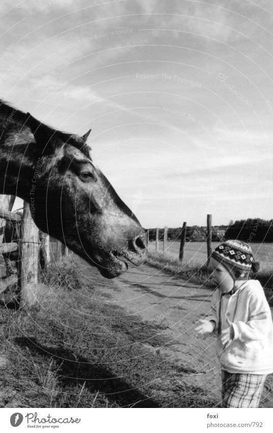 The child & the horse Child To talk Human being Toddler 1 Horse Animal face Emotions Frightening Size difference Black & white photo Exterior shot