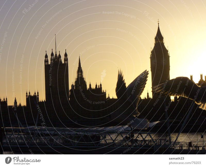Seagull London Themse Bird Back-light Sunset England Big Ben Shadow Wing Flying