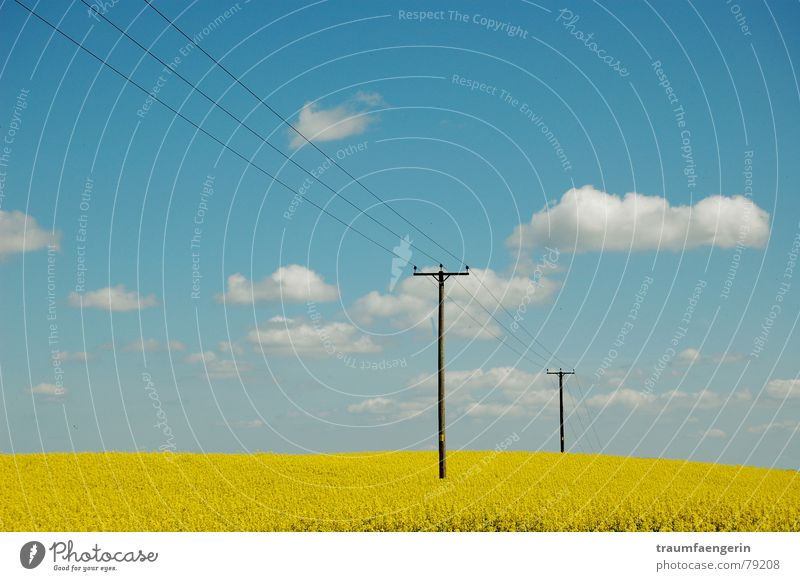 Nature Sky Flower Blue Summer Clouds Yellow Meadow Spring Landscape Field Electricity Oil Electricity pylon England Canola