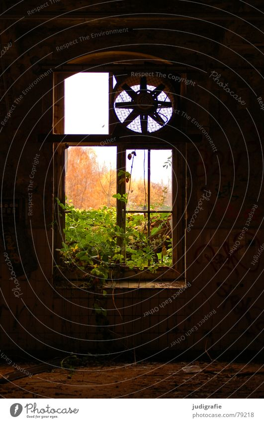 Industrial Romanticism III Ventilation Fan Useless Production plant Needy Brick Fear Ruin Facade Plaster Window Window transom and mullion Plant Tree Autumn