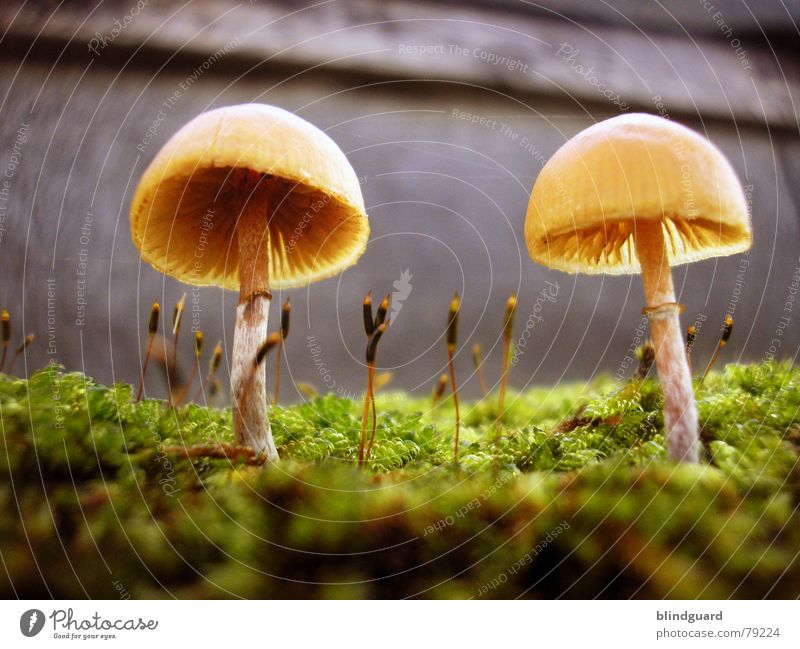 Nature Green Plant Yellow Life Autumn Wall (building) Wall (barrier) Small Environment Growth Blossoming Universe Sunshade Mushroom Botany