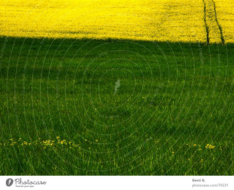 Nature Flower Green Summer Yellow Far-off places Meadow Blossom Grass Spring Lanes & trails Park Landscape Line Field Crazy