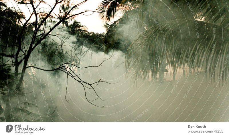 Sky Forest Landscape Fog Africa Virgin forest Gas Shroud of fog Poison gas Mauritius
