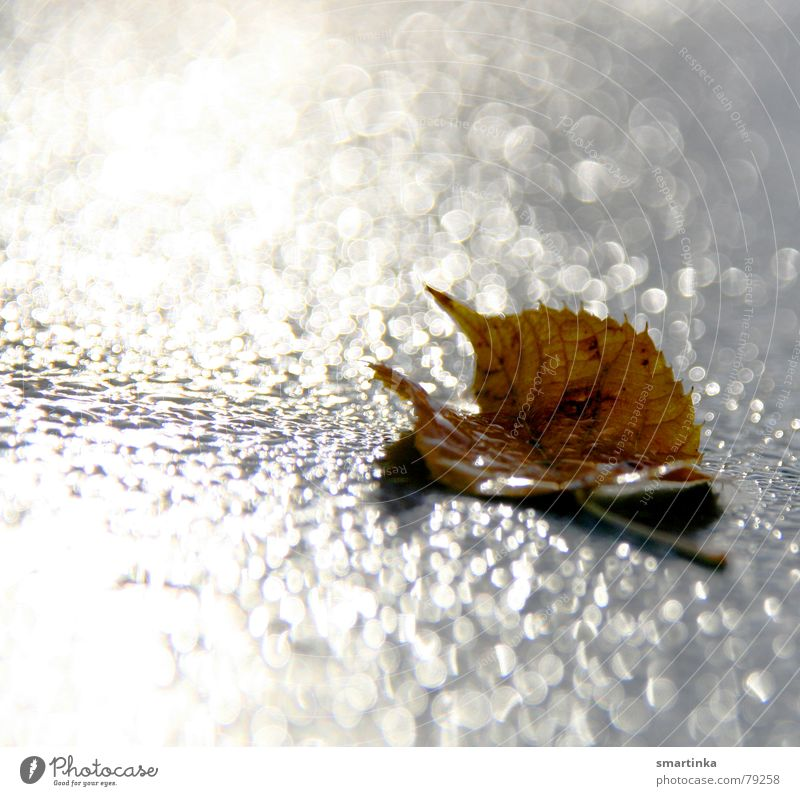 Loneliness Leaf Yellow Sadness Autumn Death Glittering Power Drops of water Rope Grief Derelict Decline End Distress Damp