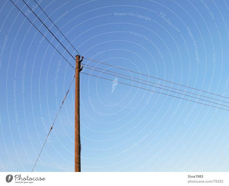 Long line Golden section Electricity Electricity pylon Wood Communicate Transmission lines Cable Sky Blue Beautiful weather Blue sky Exterior shot