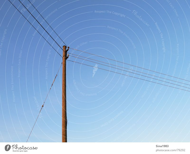 Sky Blue Wood Electricity Communicate Cable Beautiful weather Electricity pylon Transmission lines Blue sky Golden section
