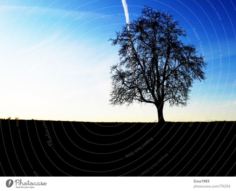 Evening mood in winter Tree Meadow Dark Field Grass Multicoloured Vapor trail Calm Think To enjoy Tree trunk Relaxation Light Sunset Autumn Gloomy Black