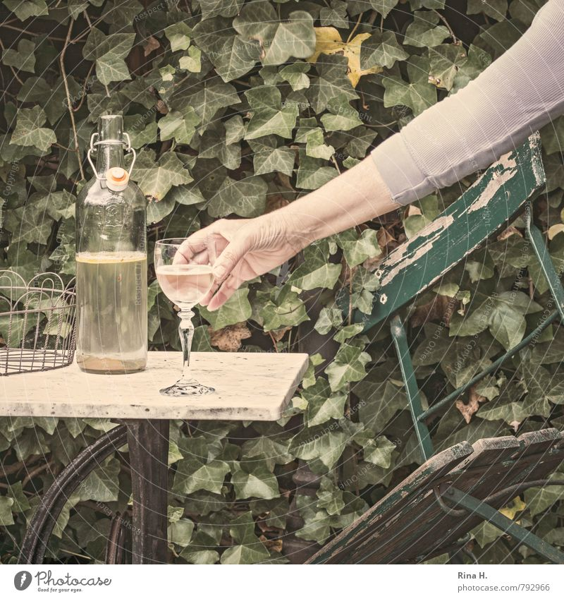 Enough, enough Human being 1 45 - 60 years Adults Ivy Garden Green Hope Alcoholism Loneliness End Resolve Addiction Still Life Garden chair Derelict Bottle