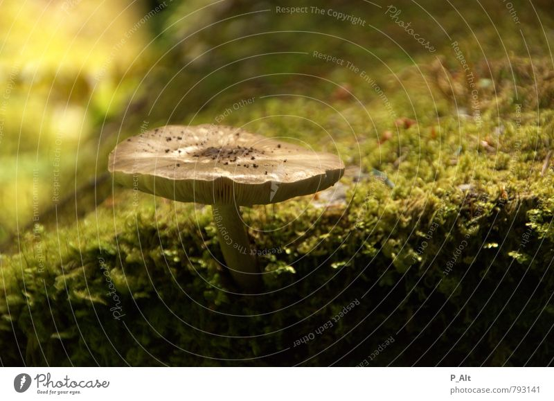 Nature Plant Green Summer Environment Earth Idyll Tree trunk Depth of field Moss Mushroom Woodground