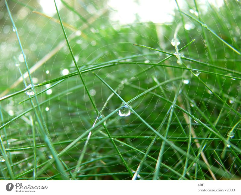 bionic Bionic Green Macro (Extreme close-up) Close-up Technology Drops of water Nature Plant grass