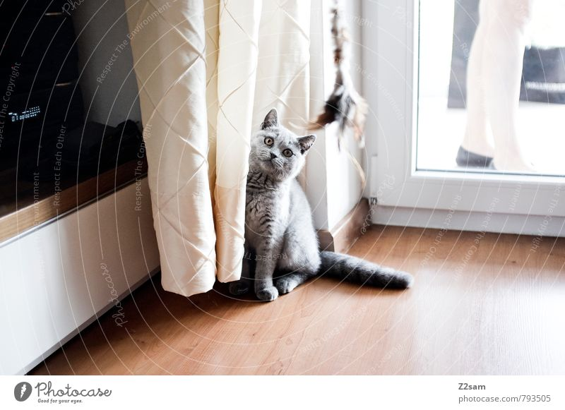 Cat Woman Beautiful House (Residential Structure) Animal Life Style Gray Bright Legs Flat (apartment) Living or residing Elegant Sit Stand Esthetic