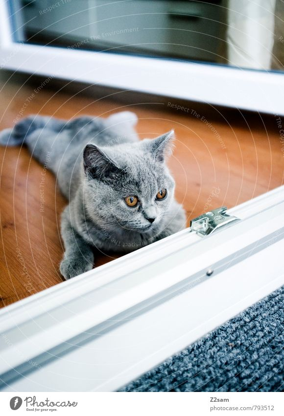Cat Beautiful Relaxation Calm House (Residential Structure) Animal Cold Baby animal Gray Small Brown Lie Flat (apartment) Lifestyle Living or residing Elegant