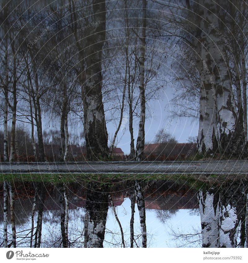 Sky over Berlin Birch tree Birch wood Puddle Reflection Leaf Wood flour Panorama (View) autumn forest autm Water kallejipp Large