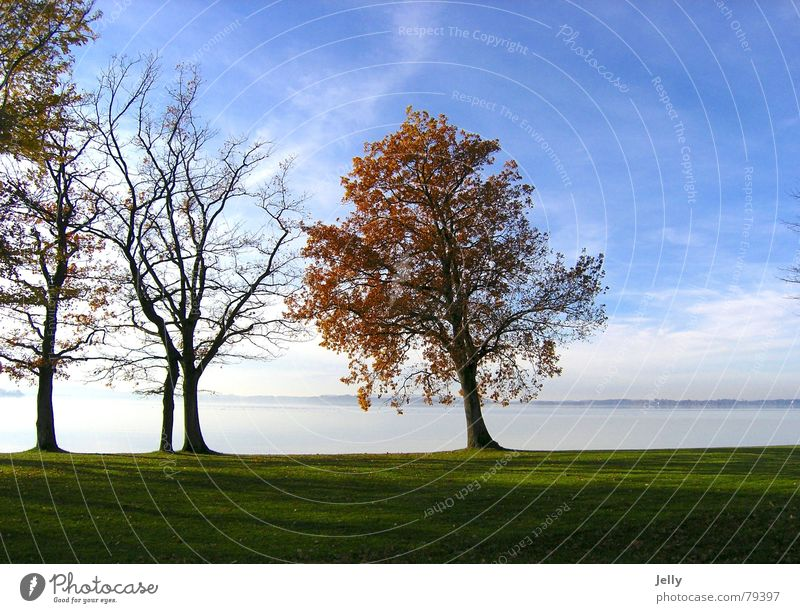 Sky Nature Water Blue Green Tree Plant Sun Leaf Far-off places Meadow Autumn Grass Beautiful weather Surface of water Lake Chiemsee
