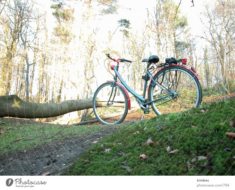 Where the hell is he? Bicycle Forest Tree trunk Green Meadow Driving Mobility In transit Bushes Leaf Wood Overexposure Dark Wait Seating Bicycle handlebars
