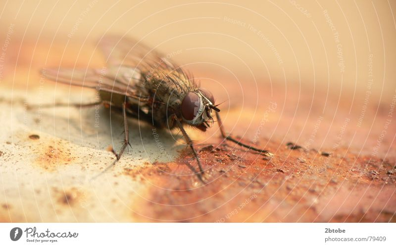 Nature Old Red Summer Black Eyes Animal Metal Bright Brown Dirty Fly Flying Wing Insect Derelict