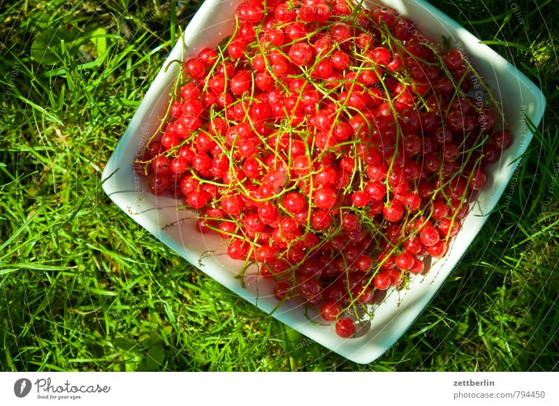 currants Garden Garden plot Garden allotments Summer Growth Redcurrant Berries Harvest Bowl Containers and vessels Vitamin Healthy Eating Dish Food photograph
