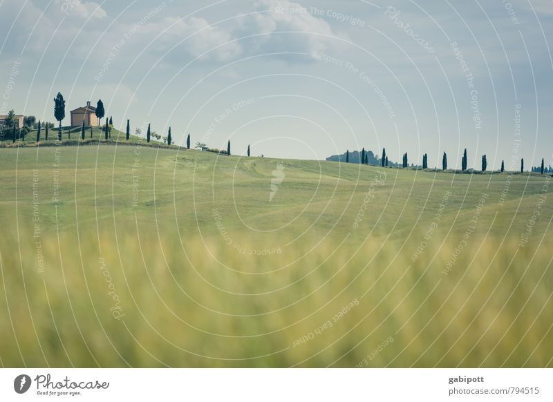line in the landscape Vacation & Travel Environment Nature Landscape Air Sky Horizon Sun Summer Beautiful weather Tree Cypress Meadow Field Hill Tuscany Italy